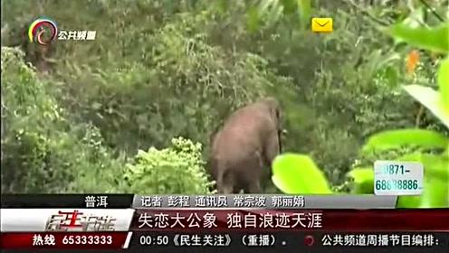 失恋大公象独自浪迹天涯