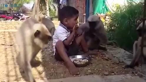 """2岁男童与群猴亲密相伴 村民将""""猴娃""""当神膜拜"""