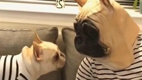 主子带上跟家里汪星人一样的头套面具,狗子直接懵X了