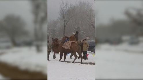 """八达岭野生动物园回应""""游客骑骆驼被摔"""":项目暂停 将道歉"""