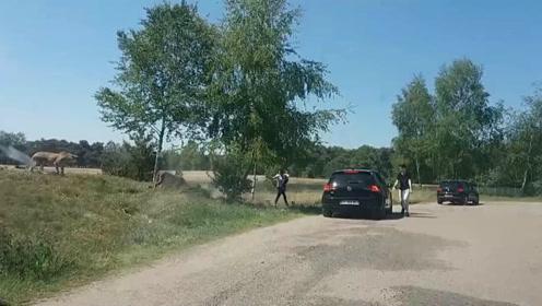 法国游客怀抱男童在野生动物园下车 被猎豹围攻险送命