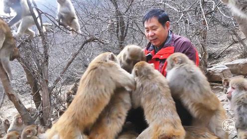太行猕猴濒临灭绝,河南大叔27年每天投递食物照顾,如今已获新生