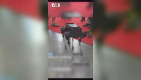 国产机械狗翻车现场