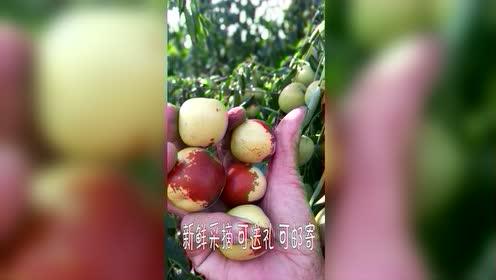 2018冬枣视频
