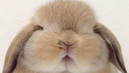 零基础素描动物教程之兔子——南乔老师