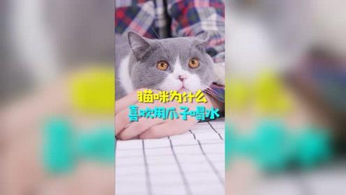揭秘猫咪为什么喜欢用爪子喝水?
