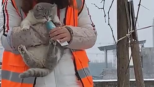 被营养膏骗走的猫咪,抱起来还不忘吃东西真的是太可爱了