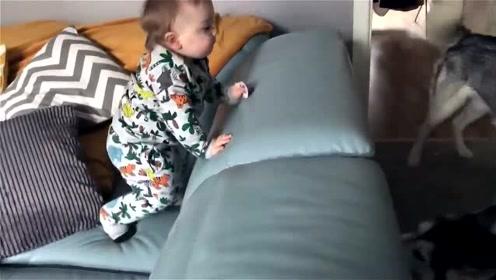 宝宝站在沙发上看哈士奇吵架,接下来宝宝的反应太有趣了