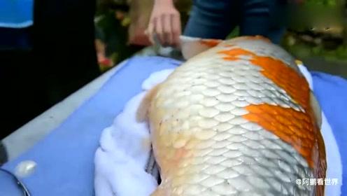 男子喂养8年之久的鱼生病,花了100万请医生来为鱼儿做手术!