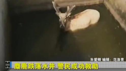 小伙去井边打水,不料井里竟出现600斤的生物,吓得立马报警!