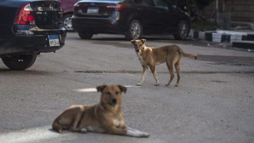 这国家有300万只流浪狗,一大妈收养170只流浪狗,无人伤害他们