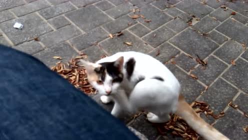 网友把小猫抱起来玩,原以为猫妈妈会生气