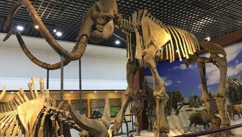 3万年前的猛犸象的细胞被提取,输入小白鼠体内后,已有生命的迹象