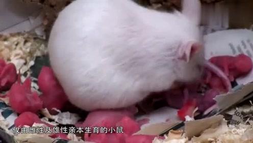 中科院影响未来的实验,证实哺乳动物可同性繁殖