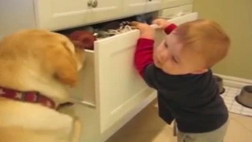 小宝宝拿不到玩具, 狗子屁颠颠的跑过来支援, 这画面实在太可爱了