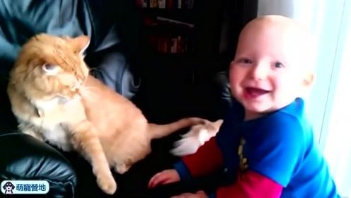 可爱又有趣的猫咪和小主人一起玩耍,太萌了啦!