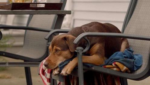 《一条狗的回家路》走吧贝拉,我们回家