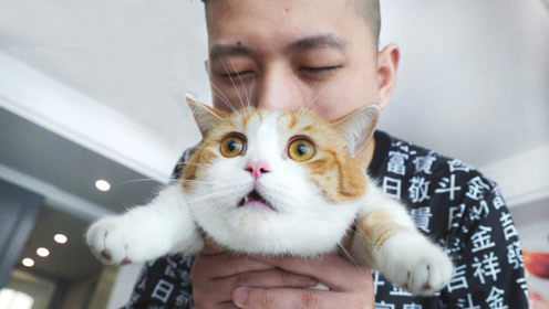 和敬汉卿挑战数猫毛,一天居然掉10万根?敬汉卿:悔不当初!