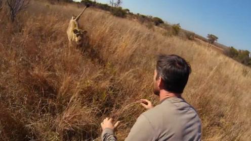 男子救下一只小狮子,多年后再相遇时,场面让人意外!