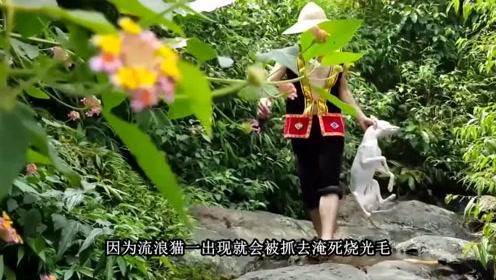 """越南人称猫为""""小老虎"""",却被人们做成美食,在当地近乎灭绝!"""