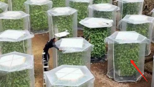 """中国农民发明""""无土种菜"""",收成翻六倍,自己在家都能种!"""