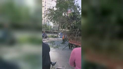 北京大风将树连根拔起 压坏路边轿车