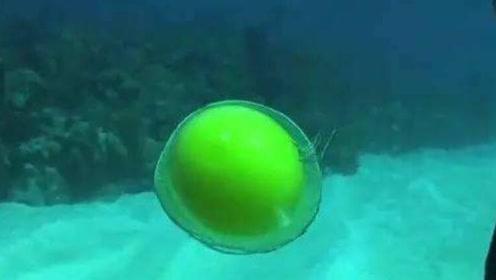 在海水中敲开一颗鸡蛋,被拍碎的那一瞬间,画面真是太美了