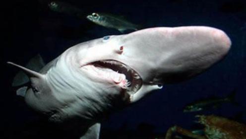 深海里幽灵般的怪物,相貌居然极其相似于游戏中的哥布林