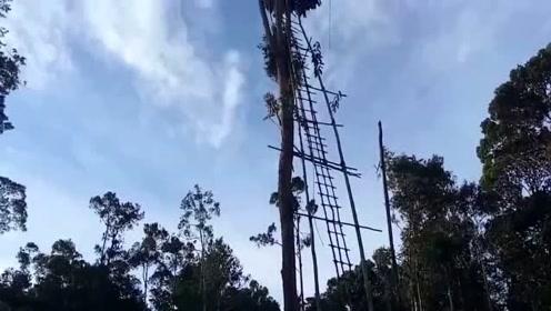 人住在鸟窝里?回趟家要攀爬几十米高的梯子