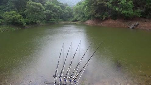 野钓:小小山塘抛下五根鱼竿,有点忙不过来了