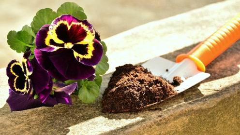 旧土就是养花的利器,不要扔,4个步骤省大钱,用了它半年不施肥