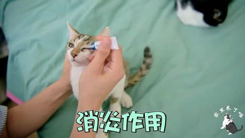 给猫咪点眼药,前后要2小时,铲屎官:你配合点,喵星人:滚!