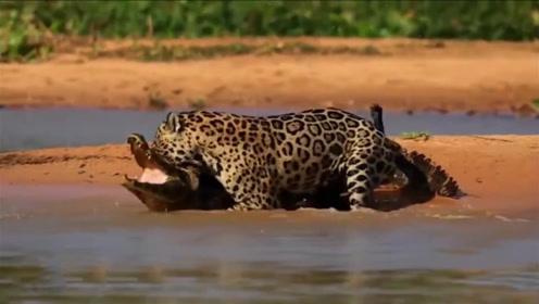 陆地霸主遇上水中之王,生死较量谁更胜一筹?