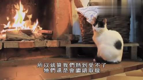 对温度的忍受度比人类略高的猫咪,这样取暖是不是有点危险?
