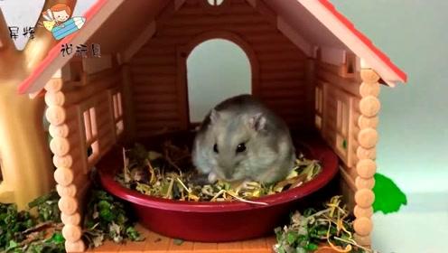 小仓鼠的新家,带有一个大滑梯的花园!