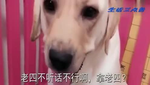 主人说想吃狗肉,让狗妈妈给他一只小狗,狗妈妈急了,气得直龇牙