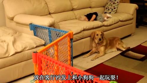 宝宝在客厅和狗狗玩耍,爸妈哭笑不得,宝宝逗小狗狗玩