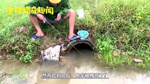 野塘排水管里能钓鱼?然而片刻之后,还真有意想不到的大货上钩!