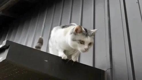 自从搬到新家猫咪每天都要出去转转 视察自己的领地