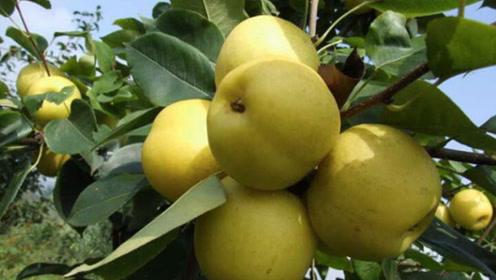 倍儿健康:到超市买水果 到底如何辨认那些人工催生的水果呢