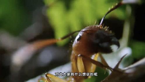 人称丧尸真菌的孢子有多恐怖?蚂蚁不慎接触,瞬间变成傀儡