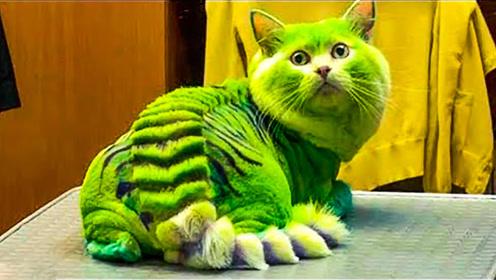 6个世界上最丑陋奇特的猫咪!长着两张脸的猫咪你见过吗?