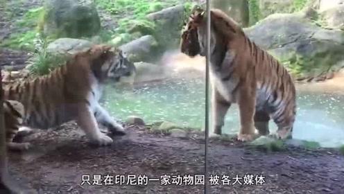 """最""""残忍""""的动物园,究竟有多""""残忍""""?"""