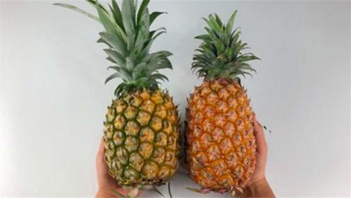 凤梨和菠萝到底有什么区别?是不是同一种水果?看完别买错了