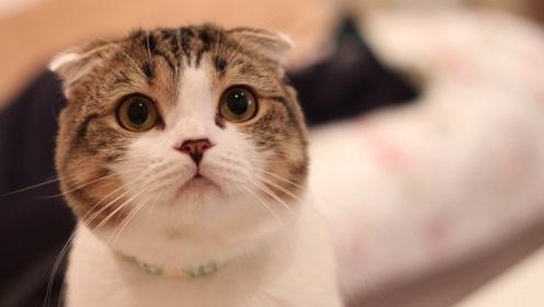 活动 圆脸小猫5——右眼塑造