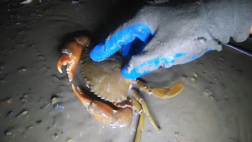 红树林根部藏着一只黄色的大螃蟹,小志看到激动了,直接收了