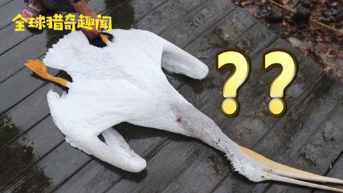 湖中大鸟离奇死亡,真相让人大跌眼镜!网友:这太意外