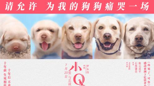 """《小Q》发布""""忠爱告白""""预告 看狗狗如何表白任达华"""