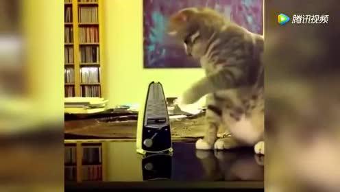 主人买了个节拍器!两只猫咪看到后跟着节奏跳起了机械舞