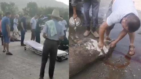 野猪突然冲出撞上飞驰摩托车毙命,车上两人重伤住进ICU